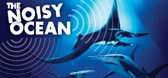 Ocean Fest: The Noisy Ocean