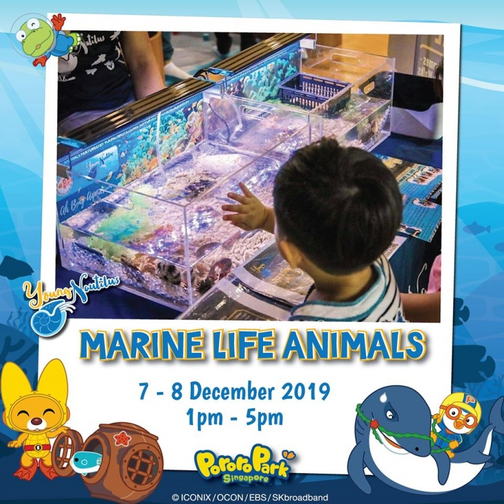 Marine Life Exhibition by Young Nautilus