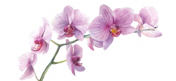 Orchid Watercolour Workshop
