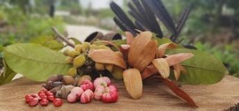 Wow Wild Seeds (A Hands-on Workshop)