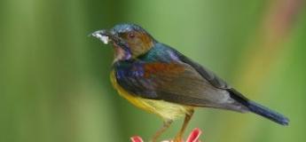 """Celebrating Wildlife"" Series: Beautiful Birds of the Gardens (A Biodiversity Investigative Workshop)"
