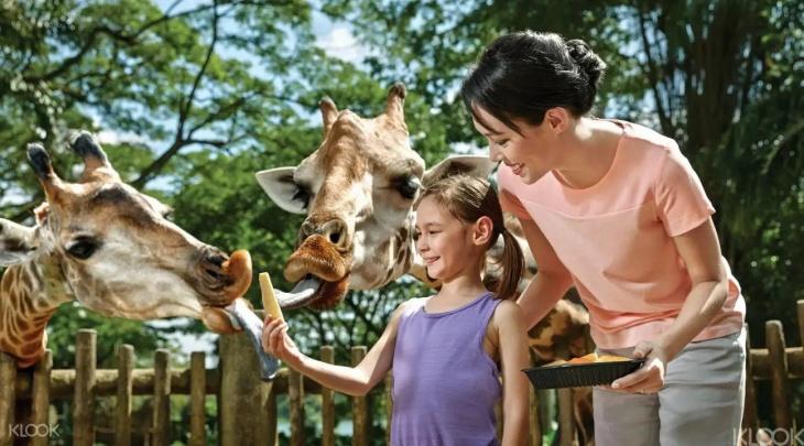 Exclusive Promo Code - Singapore Zoo Ticket