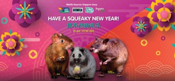 Have a Squeaky New Year @ Wildlife Reserves
