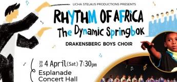 Rhythm of Africa The Dynamic Springbok