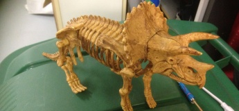 Dinosaur Bone / Skeleton Digging Kit (Large)