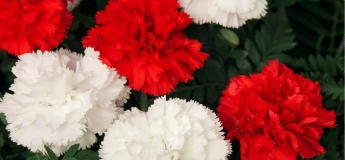 Colours in Bloom: Red & White Floral Centerpiece Virtual Workshop
