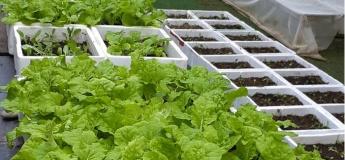 Onling Home Farming 101