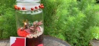 My Christmas Bottle Garden (A Hands-on Workshop)