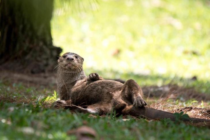 Jurong Lake Gardens Online June Holiday Programme Focus - Mammals Amphibians and Reptiles