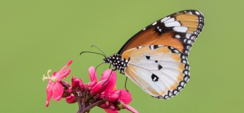 Jurong Lake Gardens Online June Holiday Programme (Focus - Insects)