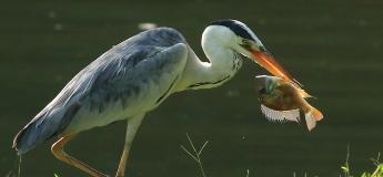 Jurong Lake Gardens Online June Holiday Programme (Focus: Birds)