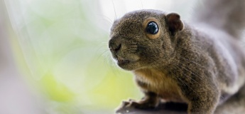 Jurong Lake Gardens Online June Holiday Programme (Focus: Animal Sounds)