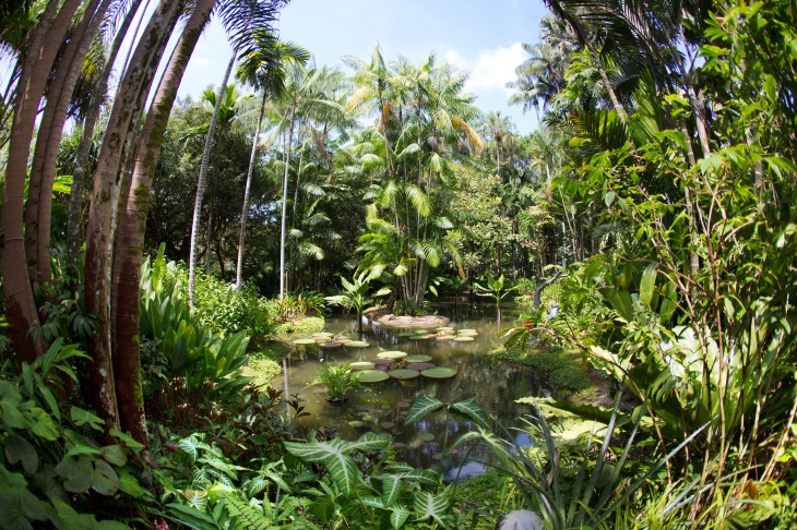 Race Against Time - Science Behind a Botanic Garden Tour