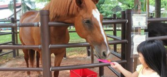 Weekend Public Pony Rides and Pony Feeding