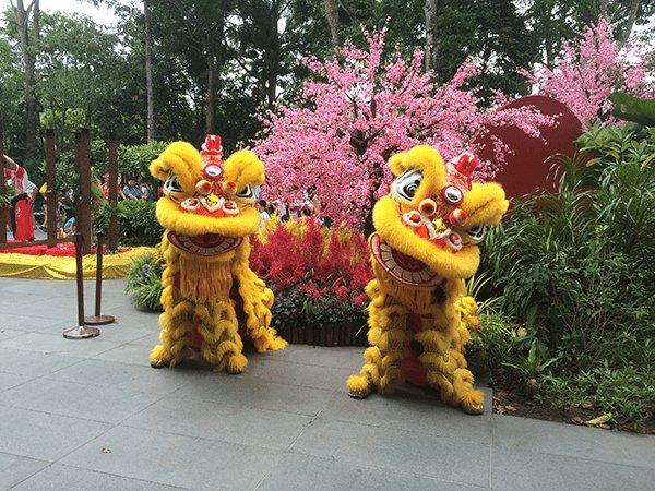Captivating Lion Dance @Singapore Zoo