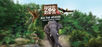 Safari Zoo Run'20