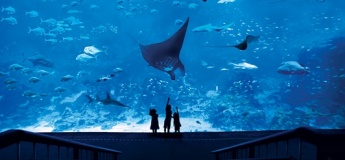 S.E.A. Aquarium™