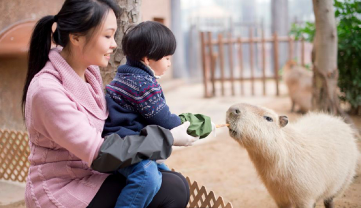 Meet the Capybara & Tamarin