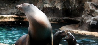Sea Lion Feeding @ Ocean Park Hong Kong