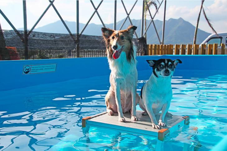 Dog Swimming Pool   Tickikids Hong Kong