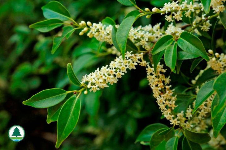 Medicinal Plants in the Countryside