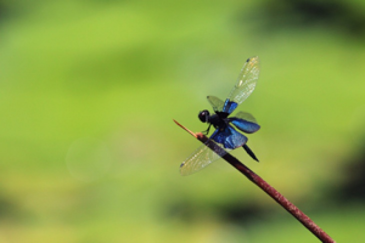 The Winged Jewels – Dragonflies