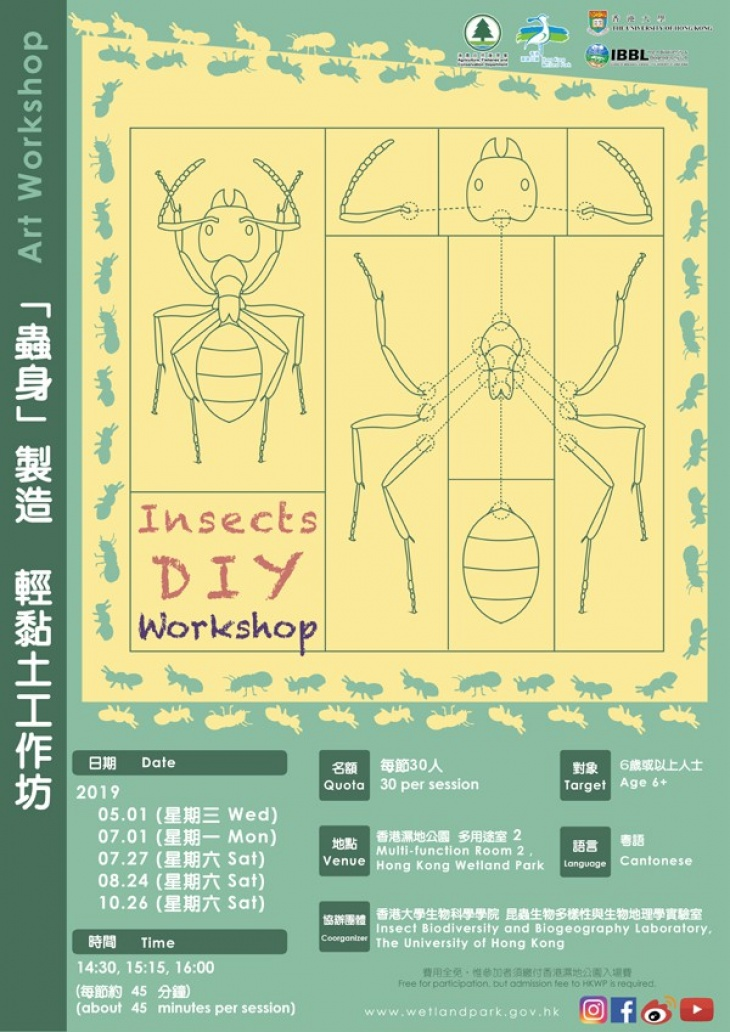 """Insects DIY"""" Workshop 