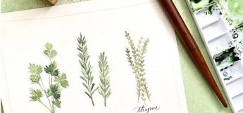 Watercolour: Herbs - August 24