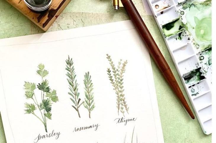 Watercolour: Herbs - August 24