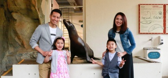 Meet the Sea Lion
