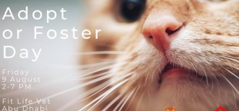 Cat and Kitten Adopt (Foster) Day