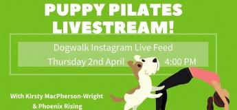 Puppy Pilates - Live!