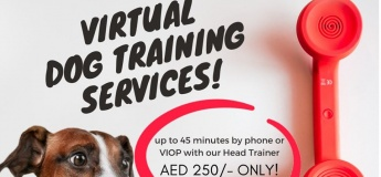 Virtual Dog Training Services