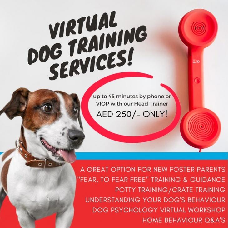 Virtual Dog Training Services