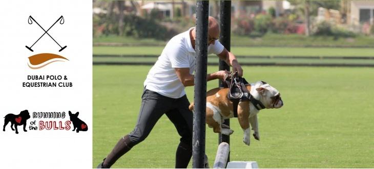 Fun Bulldog Social @ Dubai Polo & Equestrian Club