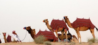 Camel Excursions at JA Al Sahra Desert Resort Equestrian Centre [SUSPENDED]