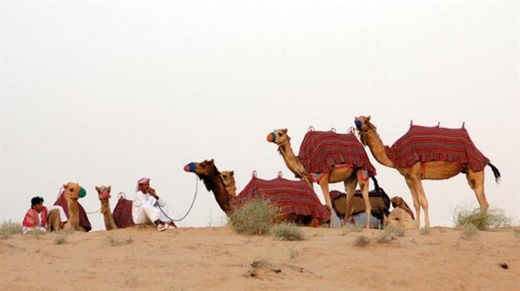 Camel Excursions at JA Al Sahra Desert Resort Equestrian Centre