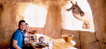 Breakfast with Giraffe