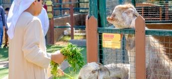 Petting Zoo @ Emirates Park Zoo