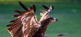 Wings of the Sahara Show @ Al Ain Zoo