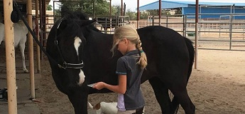 Riding lessons and rides at Rahal Ranch