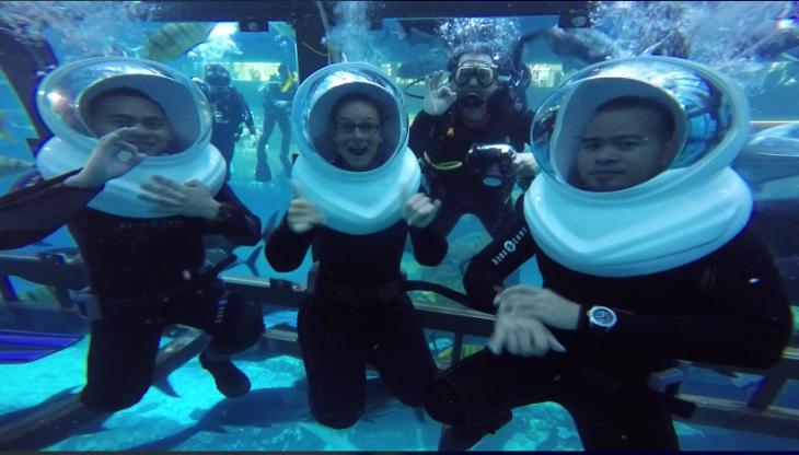 Shark Encounter experience