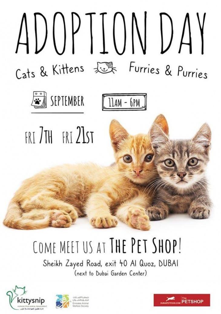 Kittysnip Cats Kittens Adoption Day Tickikids Dubai