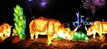 Glowing Safari @ The Glow Park