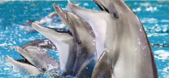 UAE's Dolphin & Seal Show @ Dubai Dolphinarium
