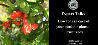 How to take care of your outdoor plants