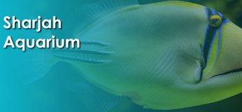 Aquarium @ Sharjah